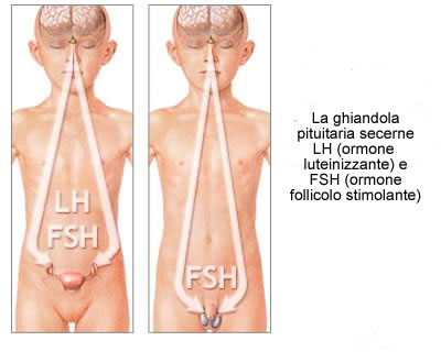 chi sono gli omosessuali Forlì